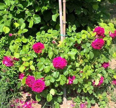 20180519 rosier anglais