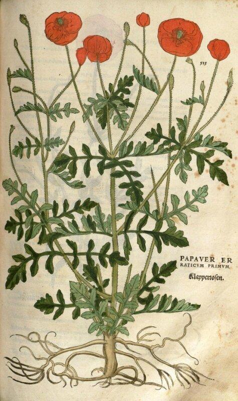 Papaver - FUCHS 1542 comp