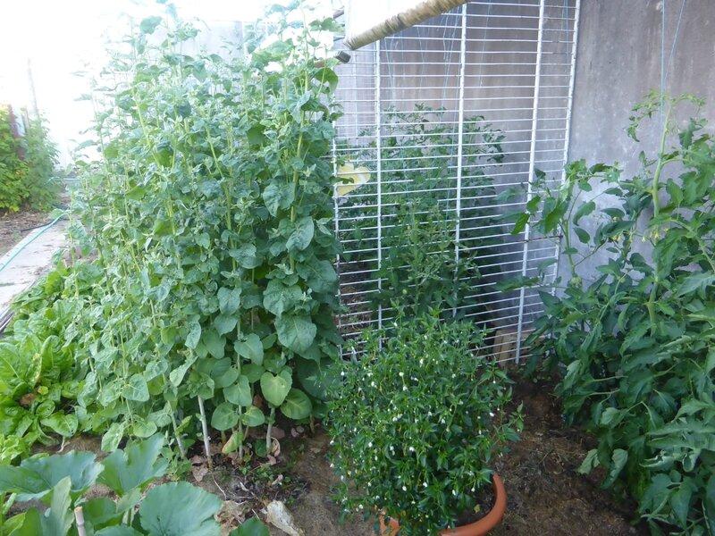 30-arroche, piments et tomates (2)