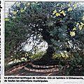 03 - 0047 - le pistachier lentisque de gattone 20 02 2012