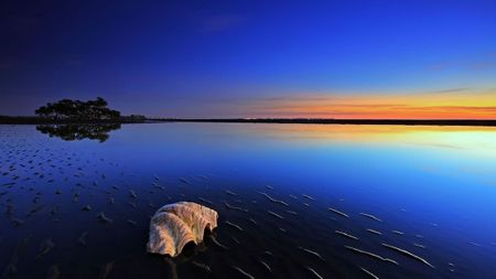 blue_scenery_beach_conch_conche_island_nature_ocean_shell_skies_sunrise_sunset_tree_550x309