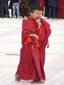jeunes_moines