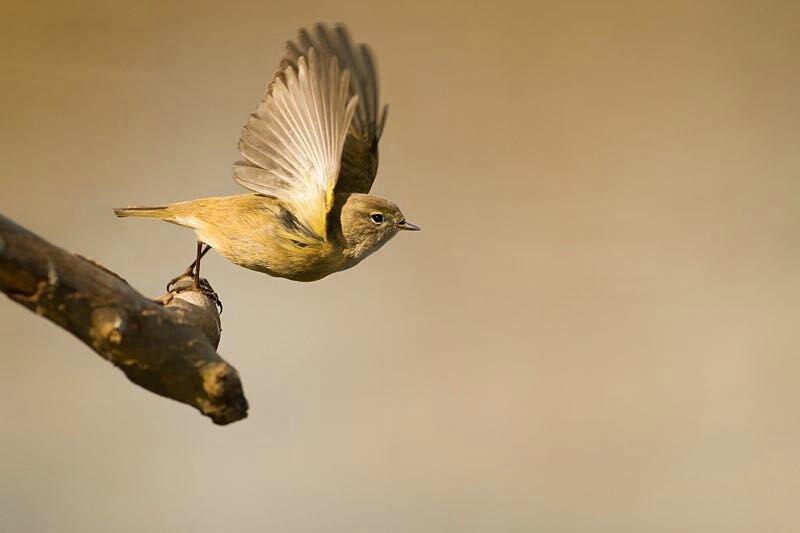 L'oiseau s'est envolé
