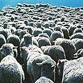 Veaux et moutons