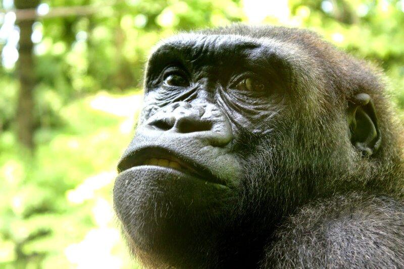 J11 - 08 juillet 2014 - zoo du Bronx (58).JPG