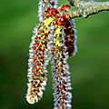 Les fleurs de bach et l'automne