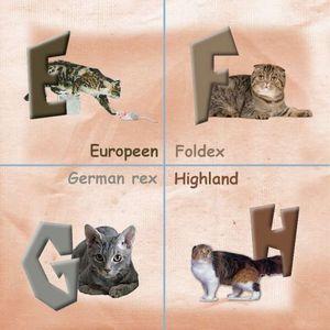 EFGH_PhotoRedukto