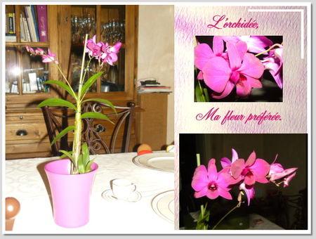 orchid_e