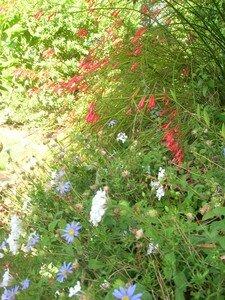 Fleurs_Toulon_035