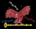 Aigle_d_chain_