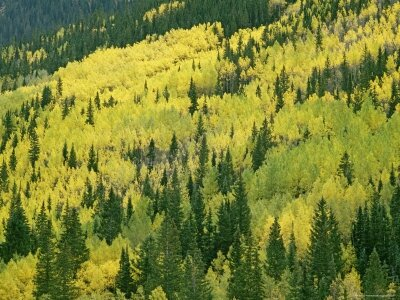gordon-wiltsie-fall-colored-aspens-in-san-juan-mountains-near-telluride-colorado