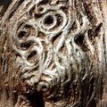 Serpents de bois ou yeux de chouette?