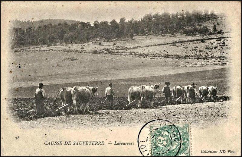 5-48-CausseSauveterre-Labour-01-1