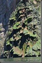 Canyon de Sumidero, cascade de tuf