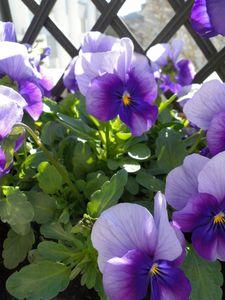 printemps_2010_024