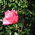 fleurs nov2015 (6)