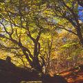 Forêt de Drouille