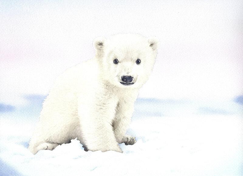 ours polaire bébé
