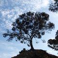 2010-Presqu'île de Giens (83) Var le 12 juin 2010