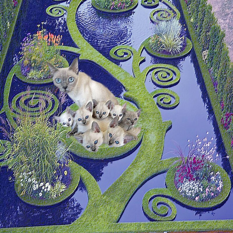 carte_chats_labyrinthe_acquatique
