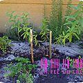 (diy) des marqueurs pour les plantes