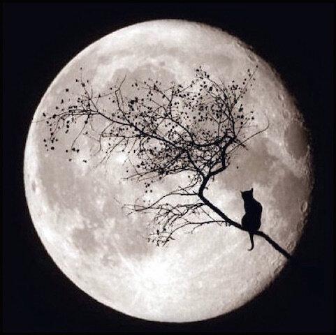 lune_et_chat_noir