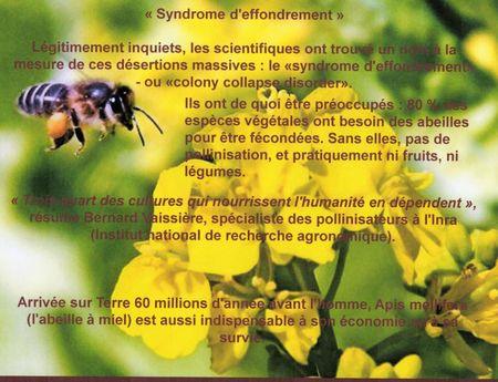 abeille_3424