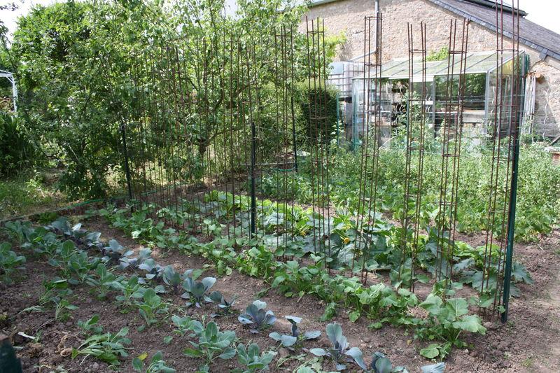 choux et tomates au printemps photo de les saisons au jardin potager notre vie notre jardin. Black Bedroom Furniture Sets. Home Design Ideas