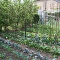 Choux et tomates au printemps