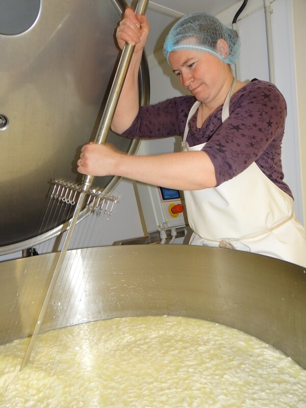 Le caillé, une des étapes de la fabrication du fromage