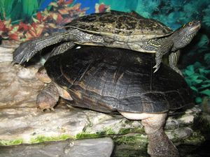 nos_tortues