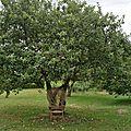 Céoby, chaise d'Emmanuelle transformée en arbre (58)