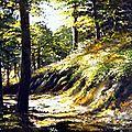 Francis-Keller-Lumiere et forêts n°11