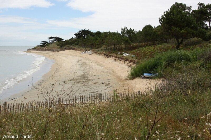 00576 Noirmoutier Juin 2020 - L'Ile d'Yeu de Port Joinville à la Plage des Vieilles - La Plage de la Petite Conche