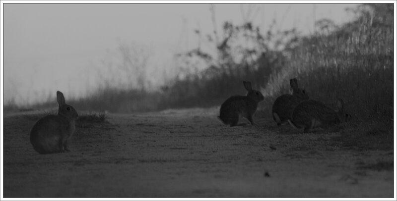plaine lapins 4 matin 100415 nb