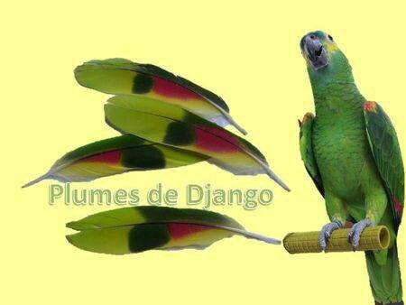 Plumes de Django