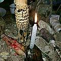 Magie vaudou,rituel d'amour des puissants maitres marabout papa kayassi.