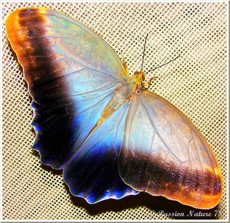 Les papillons (20)