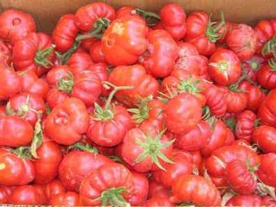 pomodoro-per-salsa