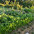 Windows-Live-Writer/Jardin_10232/DSCN0742_thumb