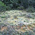 Végétal en Provence - Lichens mousses sur sol aride