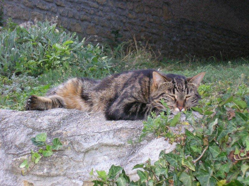 Les chats (4)