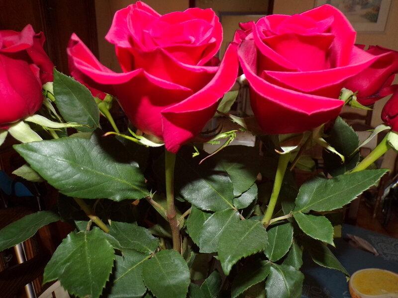 roses_saint_Valentin_2021