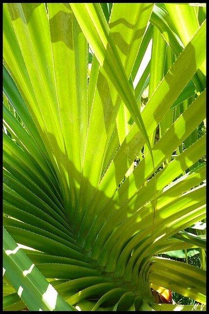 Palette de verts (4)