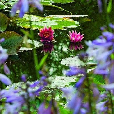 claude monet a giverny 2