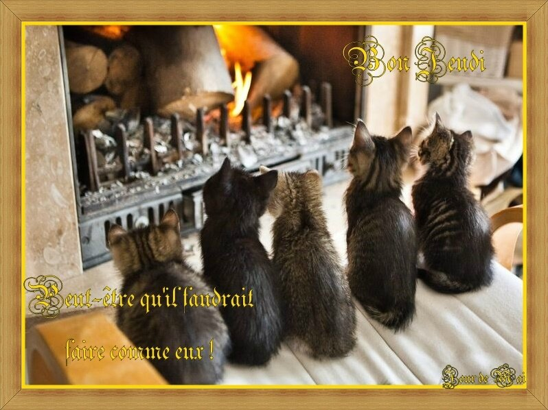 05b005812bb72858fc92270b1f122937--fireplaces-adorable-animals