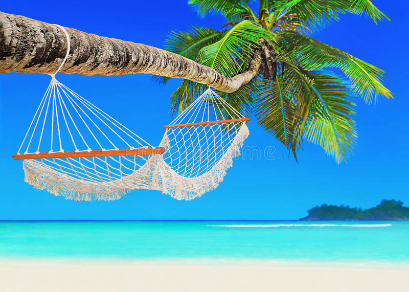 hammock-coconut-palm-tropical-sandy-ocean-beach-island-wooden-white-mesh-perfect-white-baie-lazare-mahe-seychelles-indian-80020078
