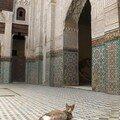 Medersa Bou Inania (Meknes)