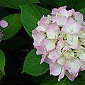 Fleurs de Leon 24061612