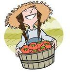 jardinière potager